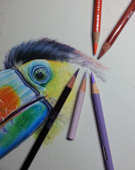 Sat 1.30pm-3.30pm Colored Pencil. Ages 10- Adult (Noriko)